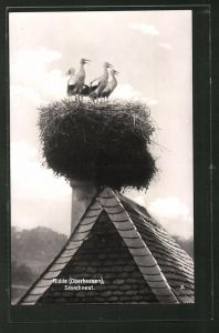 AK Nidda, Storchnest auf dem Dach eines Hauses