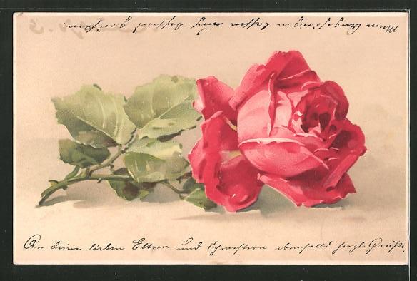 k nstler lithographie catharina klein rosen roten bl ten nr 7958685 oldthing. Black Bedroom Furniture Sets. Home Design Ideas