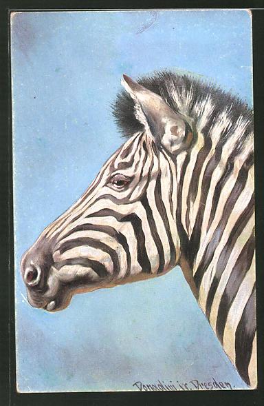 Künstler-AK Ermenegildo Carlo Donadini: Zebra