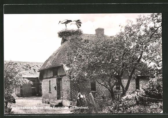 AK Fischerkathen /Ostsee, altes Bauernhaus mit Storchnest & Störchen