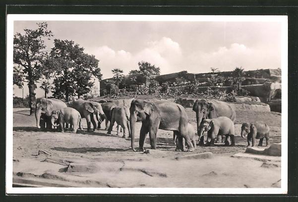AK Hamburg-Stellingen, Hagenbeck's Tierpark, Elefanten-Freisichtanlage