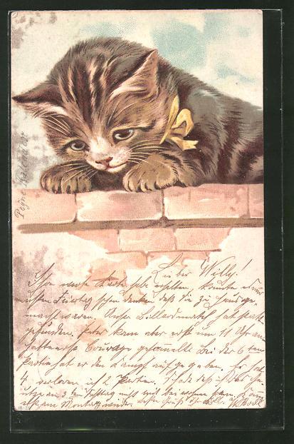 Lithographie Neugierige Katze mit Schleife um den Hals