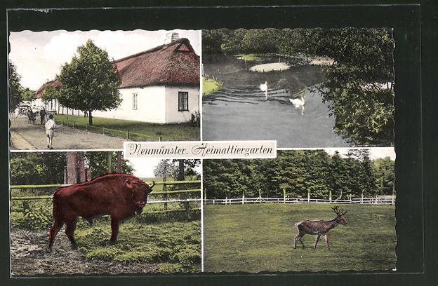 AK Neumünster, Tiere im Heimattiergarten