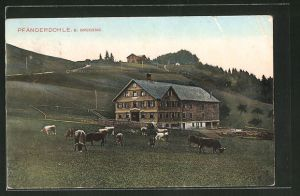 AK Pfänderdohle, Panorama mit Rindern