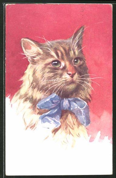 AK Langhaar-Katze mit blauer Schleife