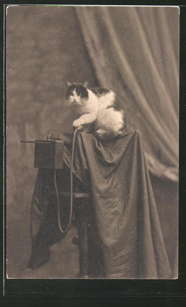 AK eine Katze bedient einen Fotoapparat