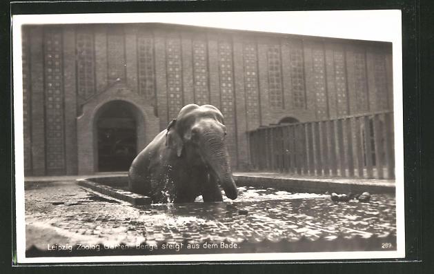 AK Leipzig, Elefant Benga steigt aus dem Bad, Zoo