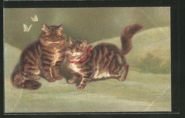 AK hübsche Katzen und Schmetterlinge