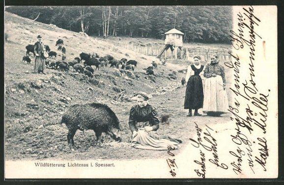 AK Lichtenau, Wildfütterung, Wildschweine