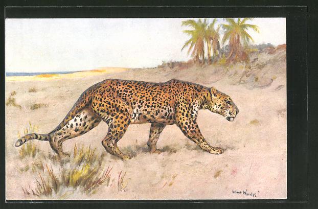 Künstler-AK Leopard am Meer