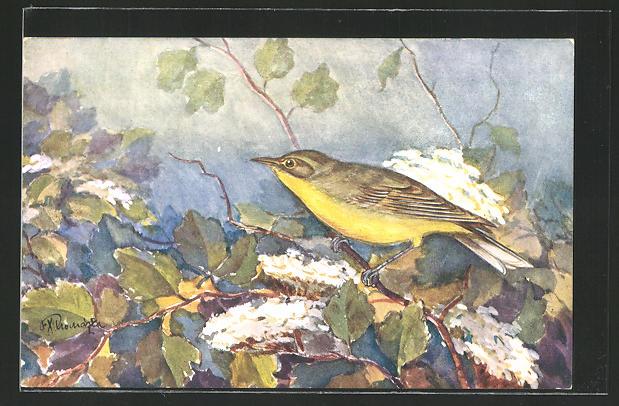 Künstler-AK Singvogel auf einem Zweig