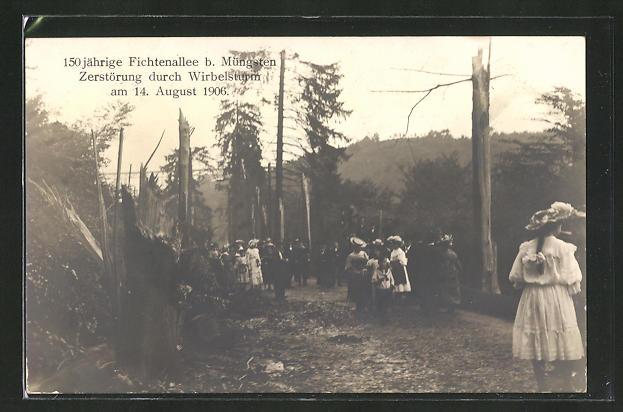 AK Müngsten, 150 jähr. Fichtenallee, Zerstörung durch Unwetter am 14. Aug. 1906 0