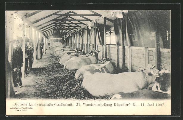 AK Düsseldorf, 21. Wanderausstellung d. deutschen Landwirtschaftsgesellschaft 1907, Kuhstall 0