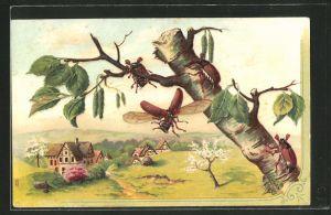 AK Maikäfer auf einem Birkenast in einer Frühlingslandschaft