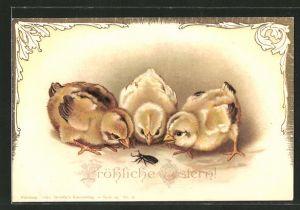 AK drei Osterküken beobachten einen Mehlkäfer