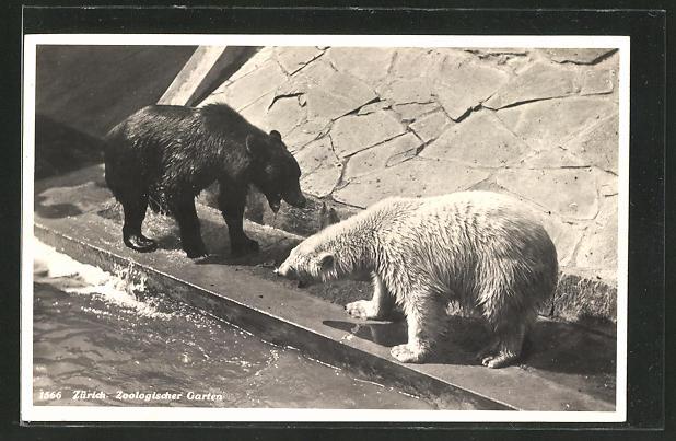 AK Zürich, Bären im Zoologischen Garten