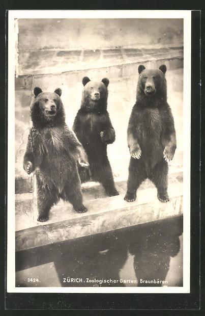AK Zürich, Zoologischer Garten, Braunbären