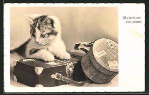 AK Katze mit Koffer und Hutschachtel,