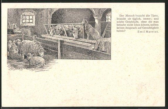 AK Kühe, Schafe und Ziege in einem sauberen Stall, Zitat von Emil Marriot zugunsten des Tierschutzes