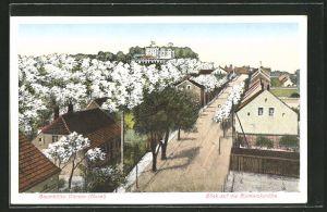 AK Werder, Blick auf die Bismarckshöhe in der Baumblüte
