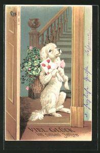 AK Pudel sitzt mit einem Blumenkorb in der Tür