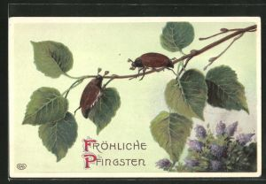 Präge-AK Fröhliche Pfingsten, Maikäfer auf einem Zweig