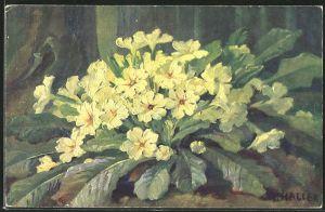 Künstler-AK Anna Haller: Blühende gelbe Blumen am Waldboden