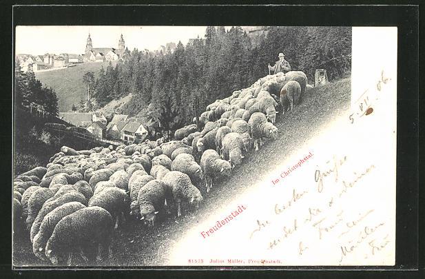 AK Freudenstadt, Schäfer mit Herde im Christophstal 0