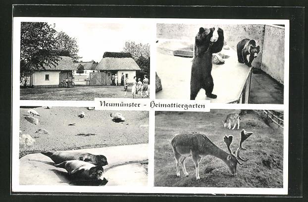 AK Neumünster, Heimattiergarten, Bären, Robben, Rotwild 0