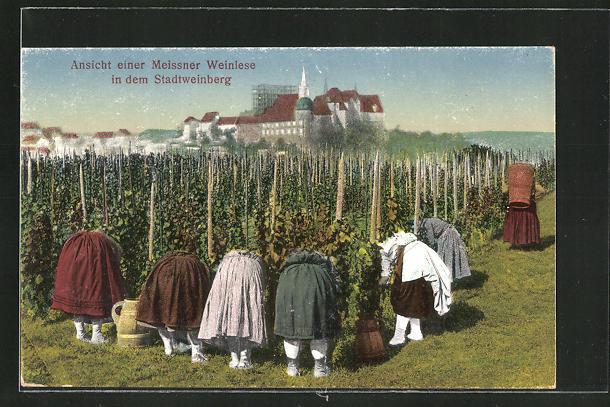AK Meissen, Ansicht einer Weinlese im Stadtweingarten 0