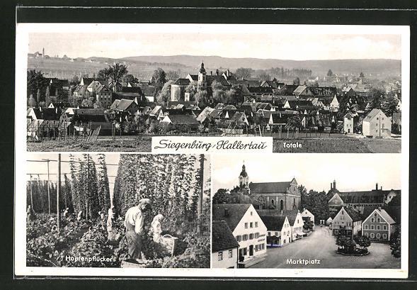 AK Siegenburg / Hallertau, Hopfenpflücker bei der Hopfenernte, Marktplatz und Ortspanorama 0