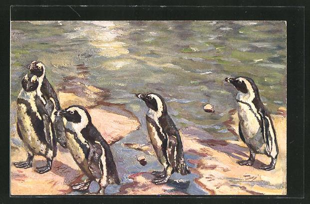 AK Dresden, Zoologischer Garten, Pinguine am Wasser