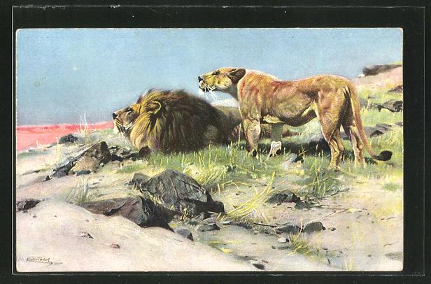 AK Löwen, die nach Beute spähen
