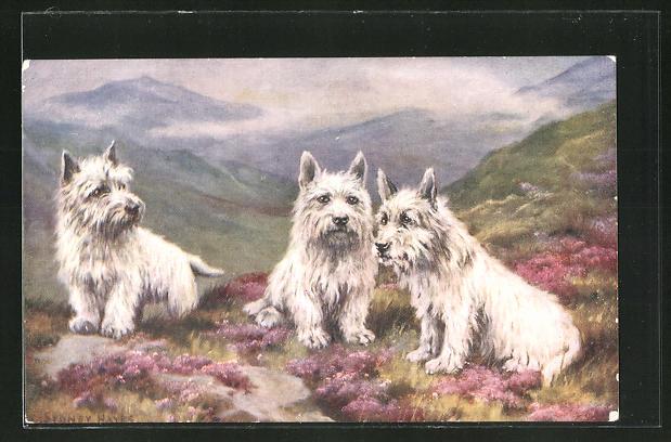 Künstler-AK Terrier mit weissem Fell