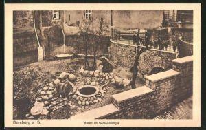 AK Bernburg a. S., Bären im Schlosszwinger