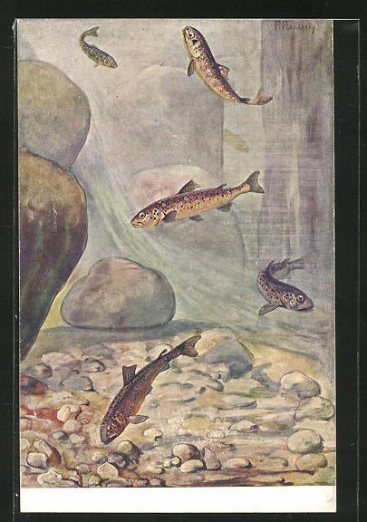 AK Fische am Meeresgrund