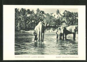 AK Kandy (Elefantenkraal), Elefanten im Wasser