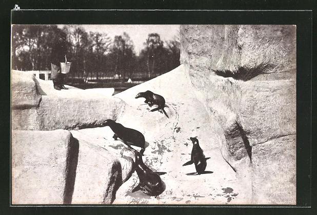 AK Seelöwen auf dem Sprungfelsen im Zoo von Nürnberg
