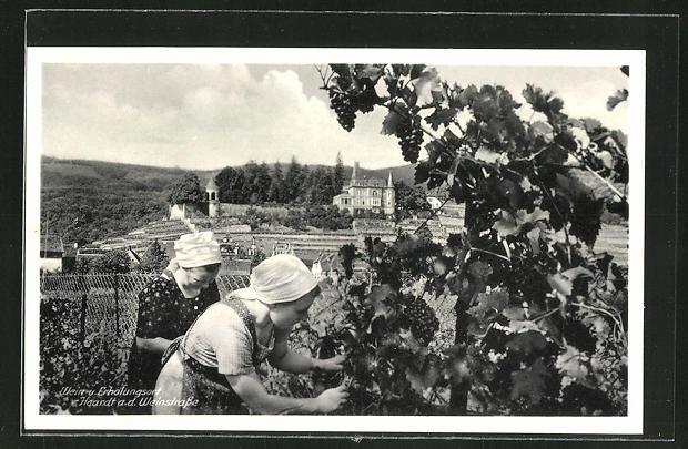 AK Haardt a.d. Weinstrasse, Frauen bei der Weinlese