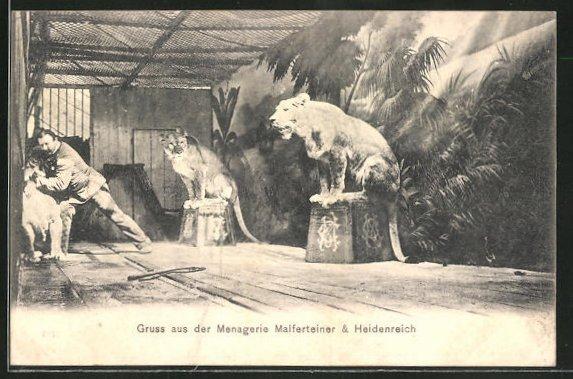 AK Löwen in der Menagerie Malferteiner & Heidenreich