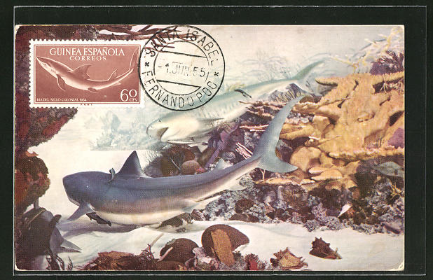 Maximum-AK Haie am Bahama Coral Riff
