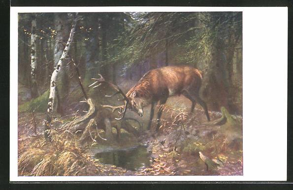 AK Hirsch an der Wasserstelle im Wald