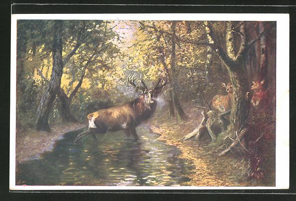 AK Röhrender Hirsch im Bachlauf