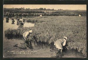 AK Farmer's wife working in the rice field