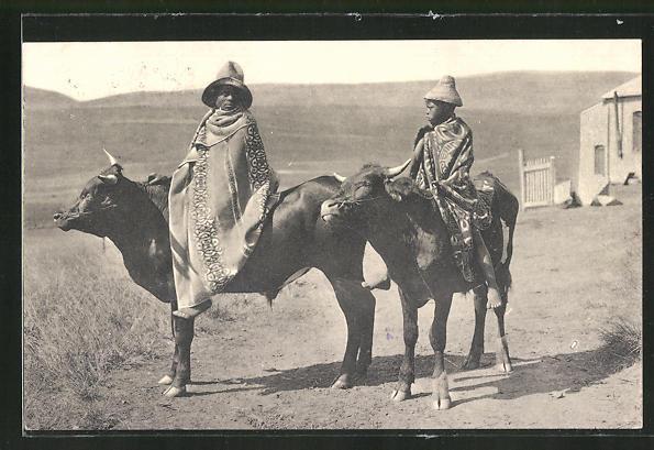 AK Zwei Afrikaner reiten auf Ochsen