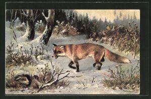 AK Hase versteckt sich in seinem Bau vor dem hungrigen Fuchs