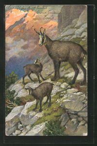 Künstler-AK Gemsen am Hang in den Bergen
