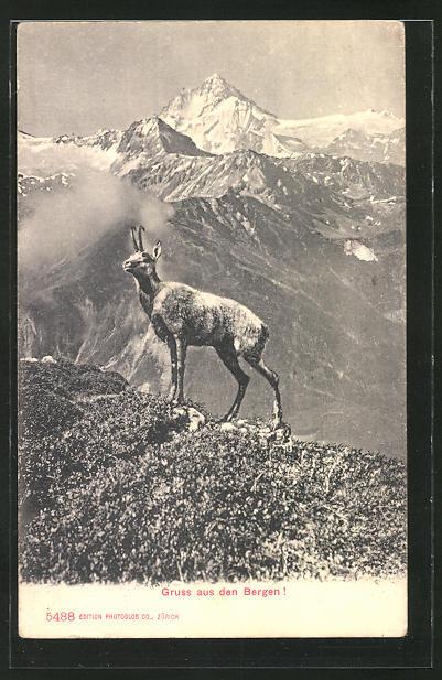 AK Gemse in den Bergen