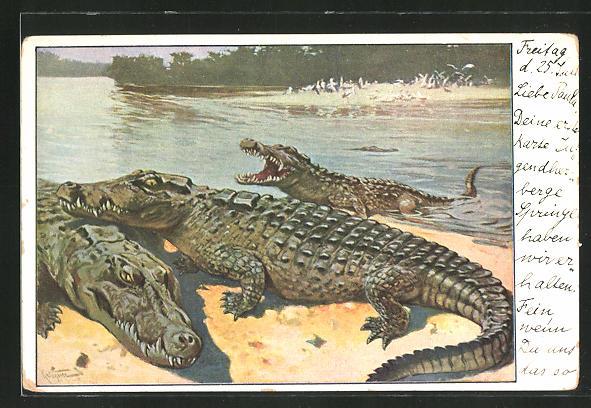 AK Krokodile lagern an einem Fluss