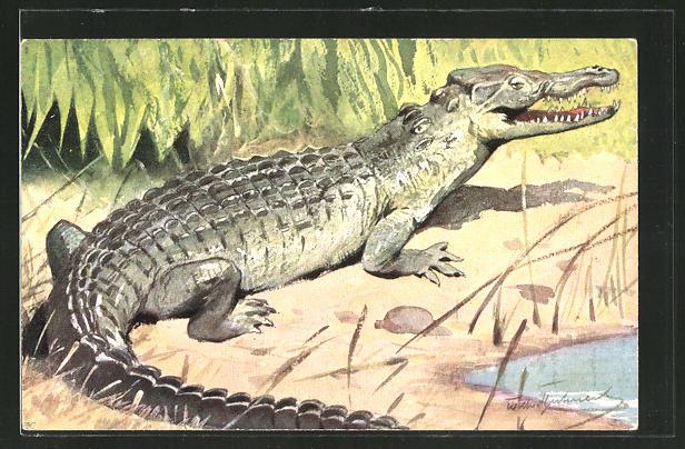 AK Krokodil an einer Uferböschung